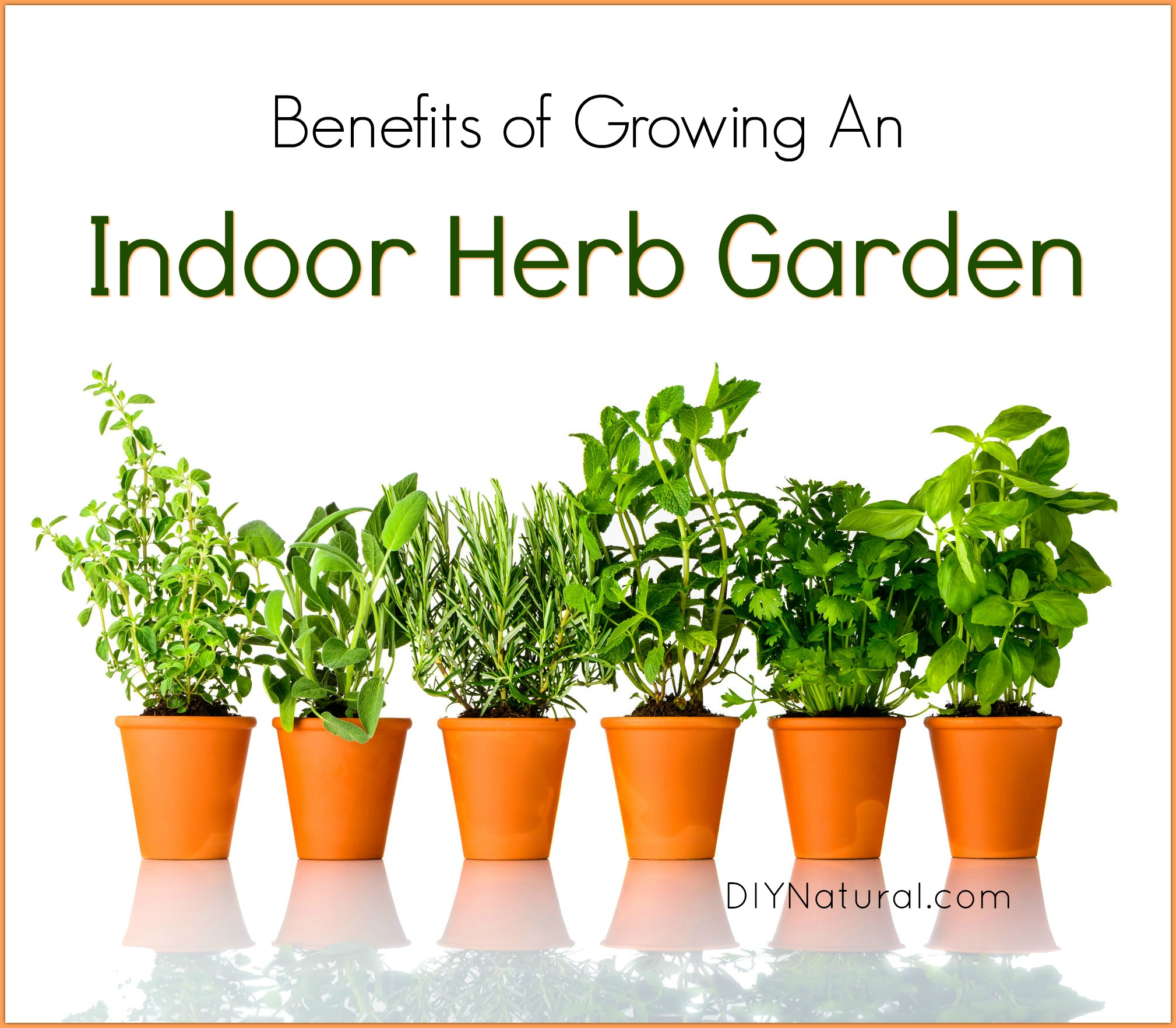 Indoor herb garden 5 reasons you should be growing herbs - Best herbs to grow indoors ...