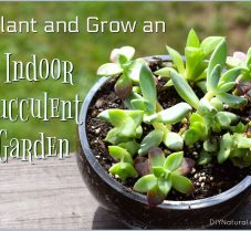 Purify your Indoor Air with A DIY Succulent Garden
