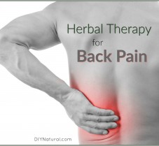 Natural Herbal Therapies For Your Aching Back Pain