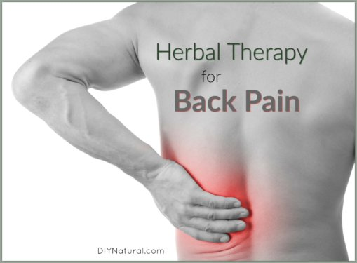 Inflammation Back Pain Herbs Rememdies