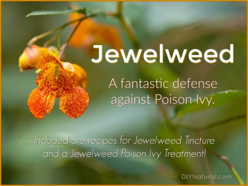 Jewelweed Poison Ivy