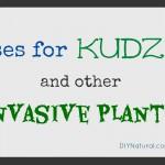 Ways to Use Kudzu and Other Exotic Invasive Plants