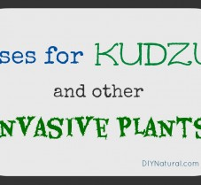 Ways to Use Kudzu and Other Exotic Invasive Plants