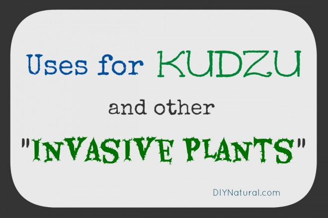 Kudzu Invasive Plants