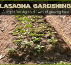 Lasagna Gardening: What It Is and How To Set It Up