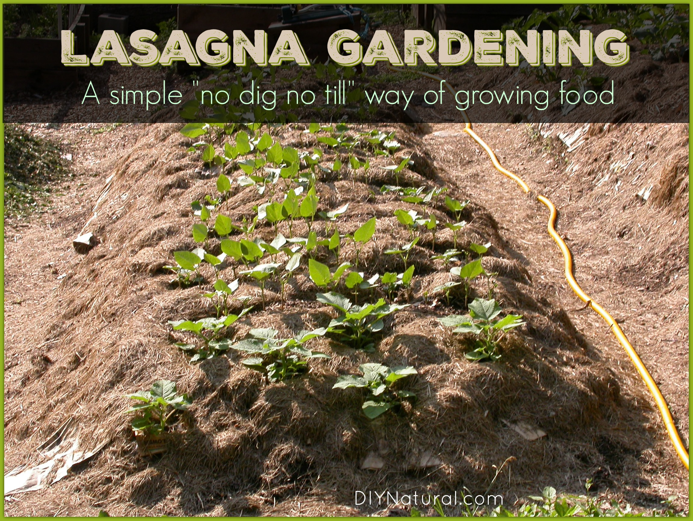 Lasagna gardening what it is and how to set it up - Lasagna gardening in containers ...