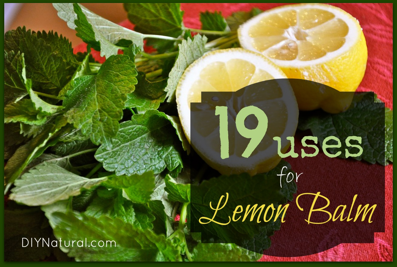 Lemon Balm Uses - A Great Herb For Health Beauty and More