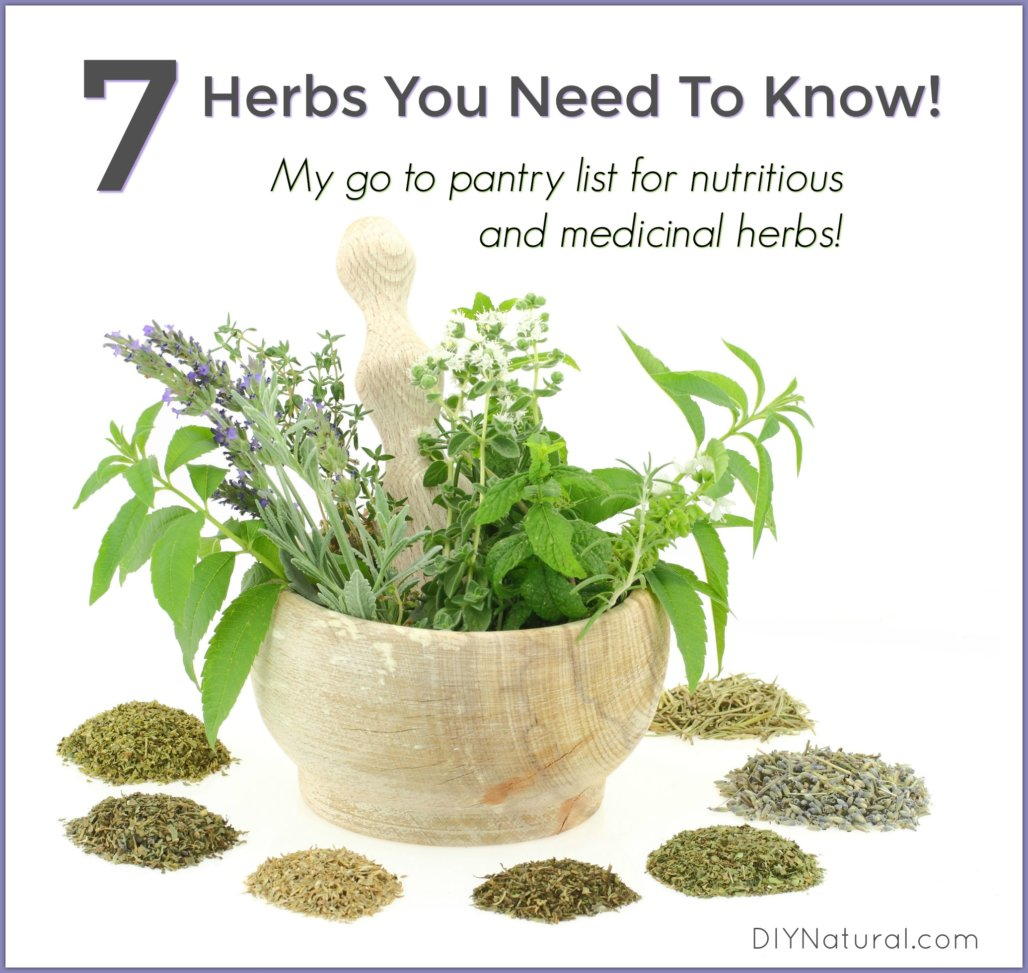 List of Herbs: 7 High Nutrition and Medicinal Herbs You ...