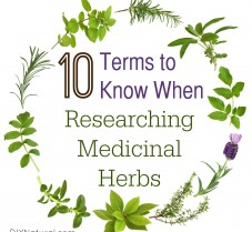 10 Terms To Know When Researching Medicinal Herbs