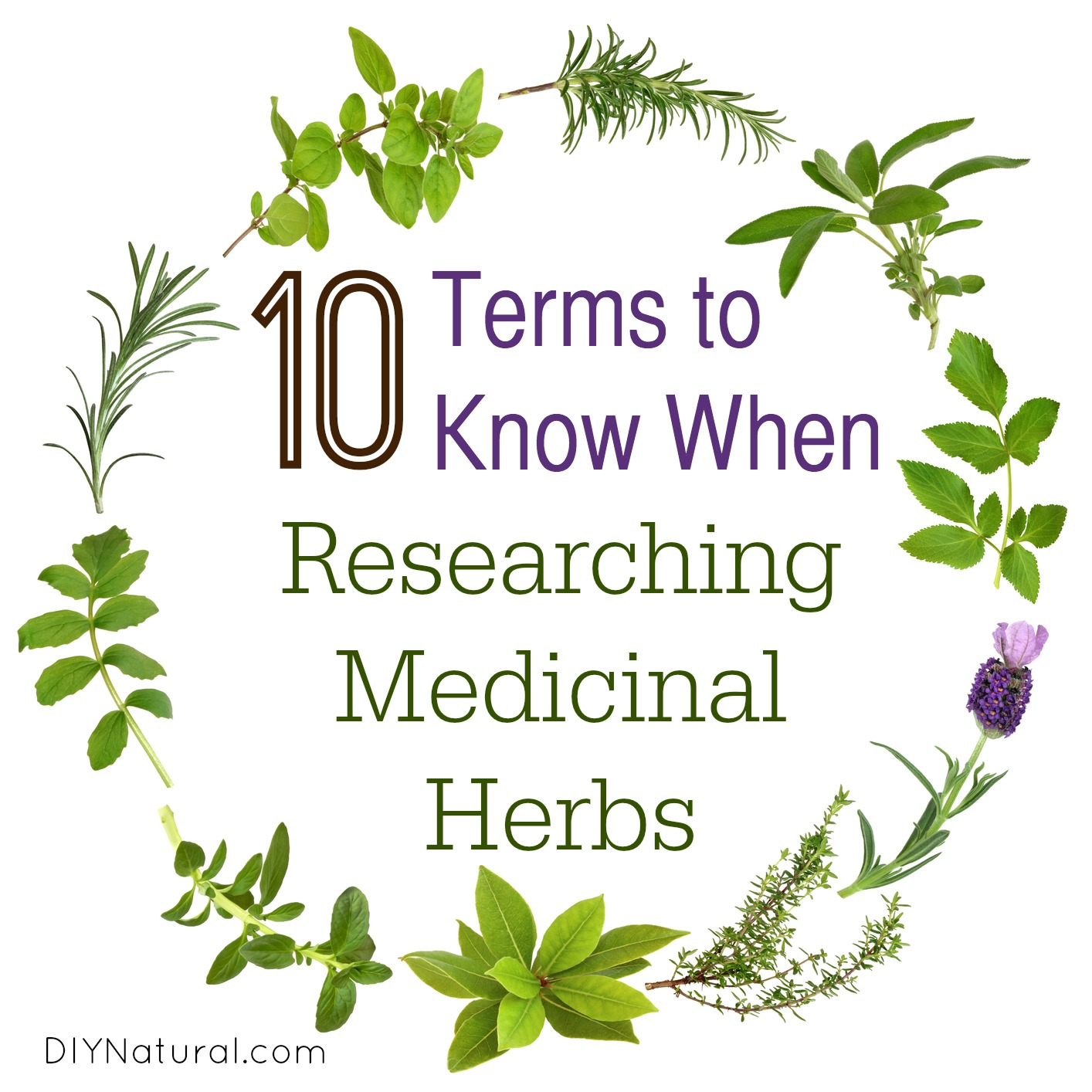 importance of medicinal plants in our lives Importance of medicine in our daily lives retrieved march 24, 2018, from ­of-­medicine-­in-­our-­daily-­lives&id=480726 chicago style citation.