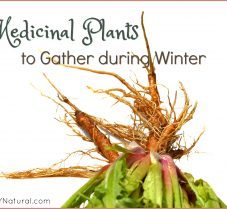 Learn Which Medicinal Plants to Gather in the Winter