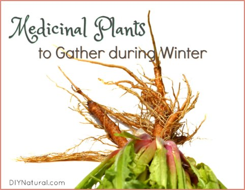 Medicinal Plants Winter