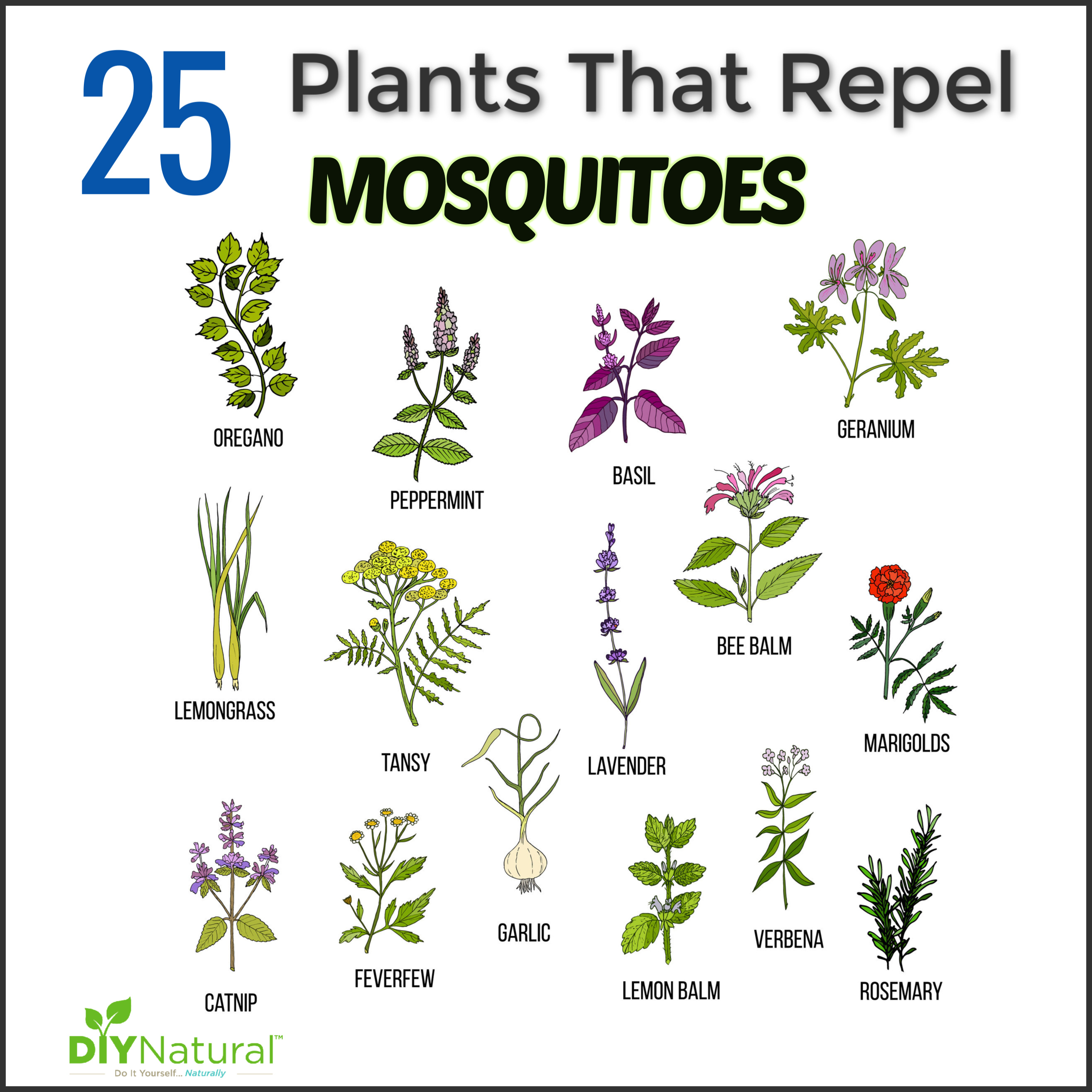 Mosquito Repellent Plants 25 Plants That Repel Mosquitoes Naturally