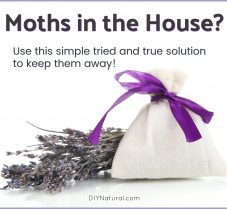 Learn to Keep Moths Out of Your House Naturally