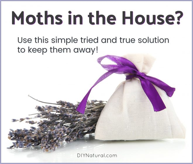 Moths in House