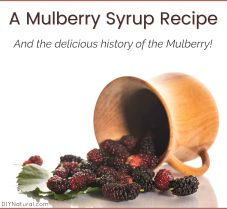 The Many Uses of Mulberries and A Syrup Recipe