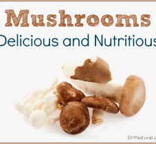 Mushroom are Delicious AND Have Health Benefits