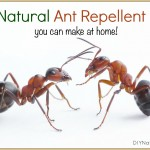 A Simple Effective Spray That Repels Ants Naturally
