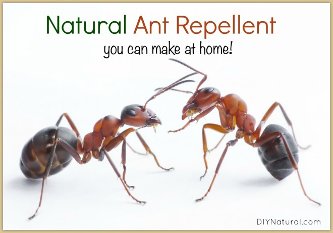 Natural Ant Repellent