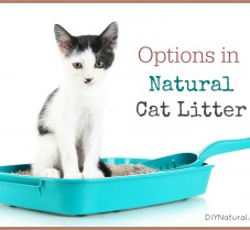 Several Types of Natural Cat Litter: Use What Works