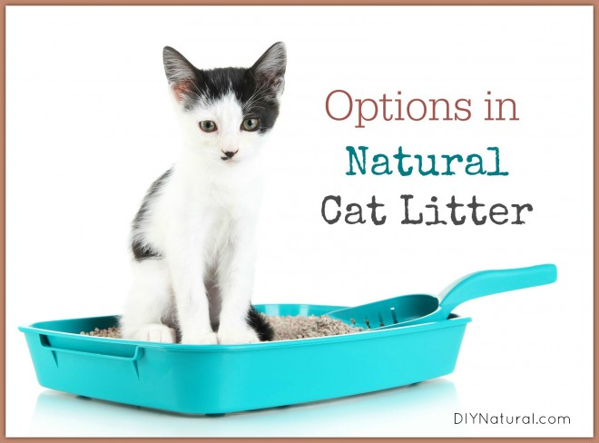 Natural Cat Litter
