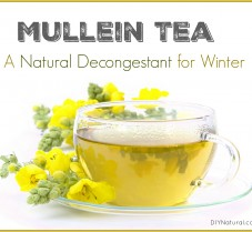 Mullein Tea is A Natural Decongestant for Winter