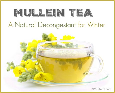 Natural Decongestant Mullein Tea