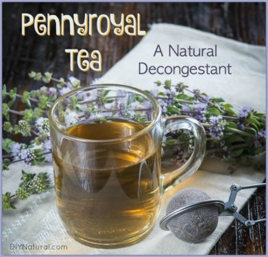 Natural Decongestant Pennyroyal Tea