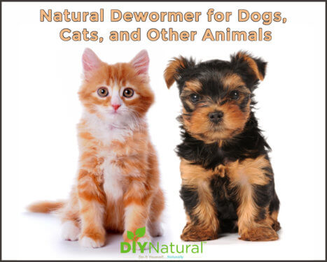 Natural Dewormer for Dogs and Cats
