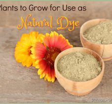 Learn How To Grow Plants for Use as Natural Dye