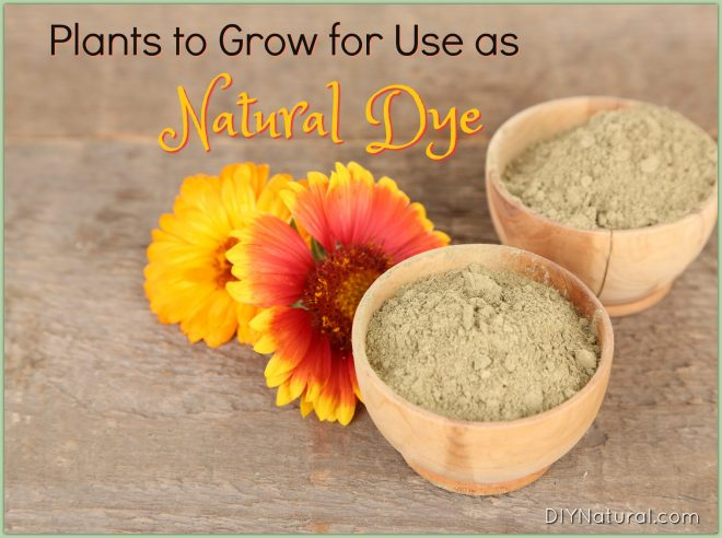 Natural Dye: Plants You Can Grow To Color Things Naturally