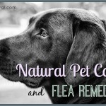 10 Ways to Care For Your Pet Naturally