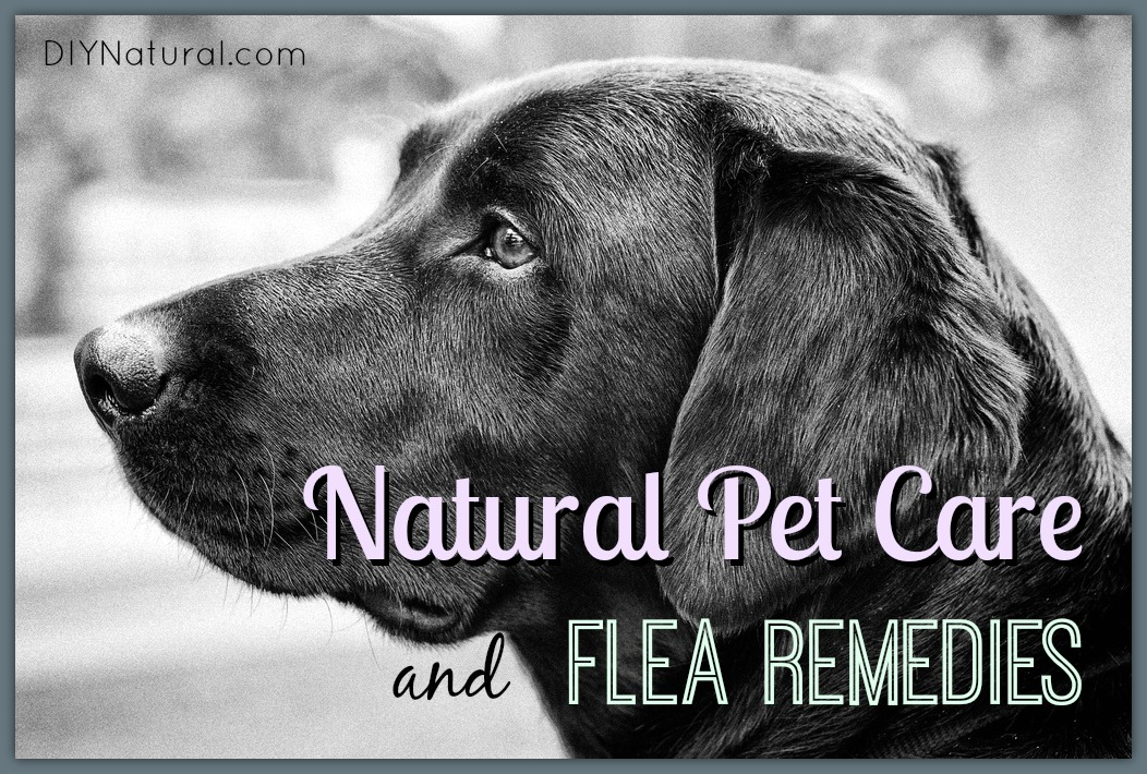 Natural Flea Remedies and Other Natural Pet Care Solutions