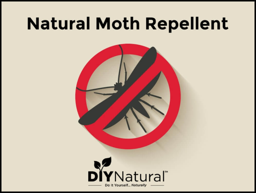 Natural Homemade Moth Repellent