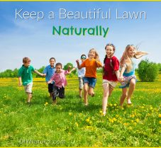 Learn To Keep A Great Looking Lawn, Naturally!