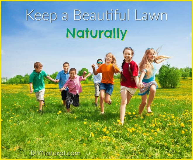 Natural Lawn Care