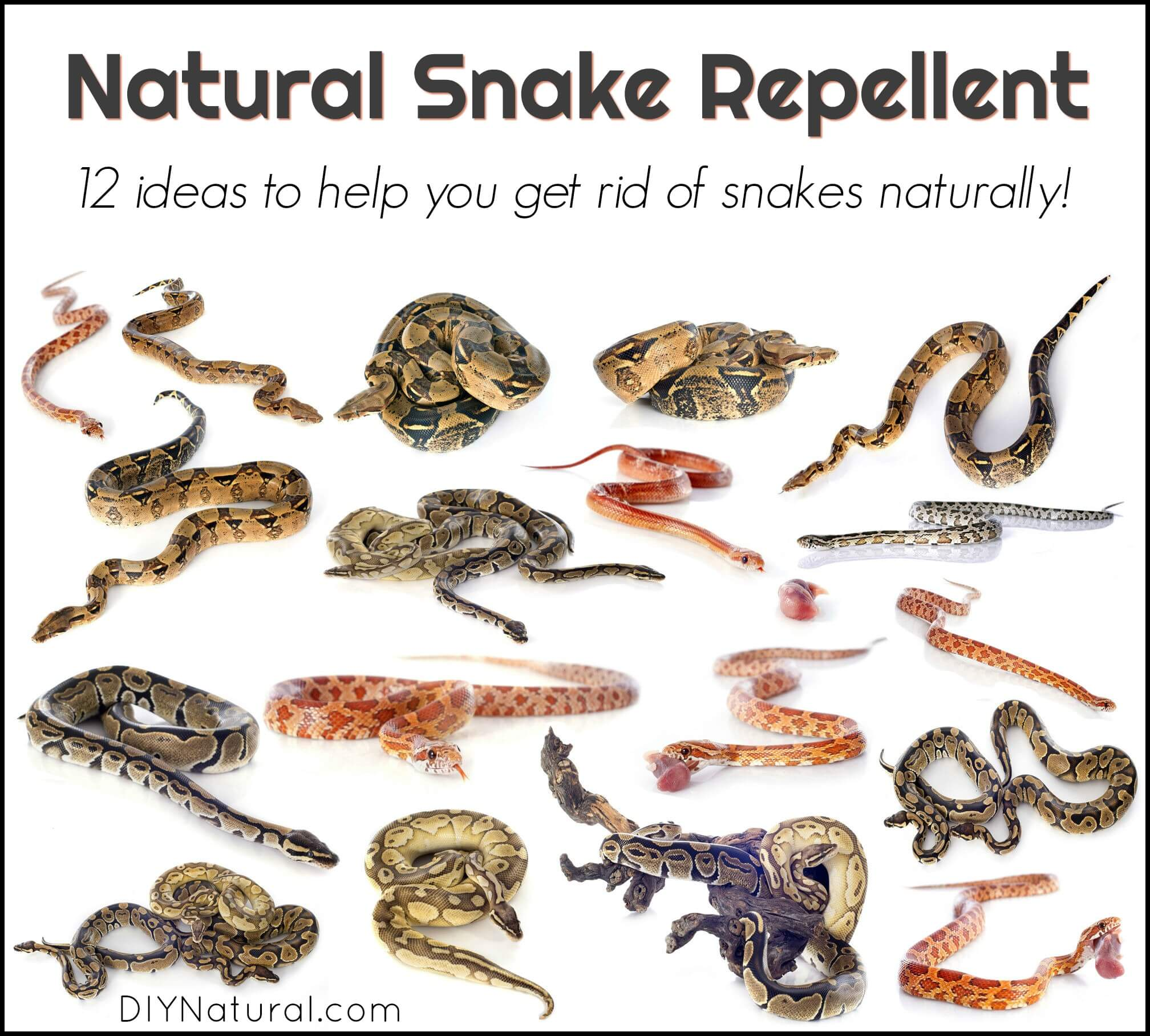 12 Natural Snake Repellent Ideas To Get Rid of Snakes