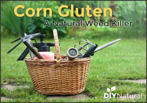 Natural Weed Killer Corn Gluten