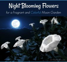 Night Blooming Flowers to Grow in Your Moon Garden