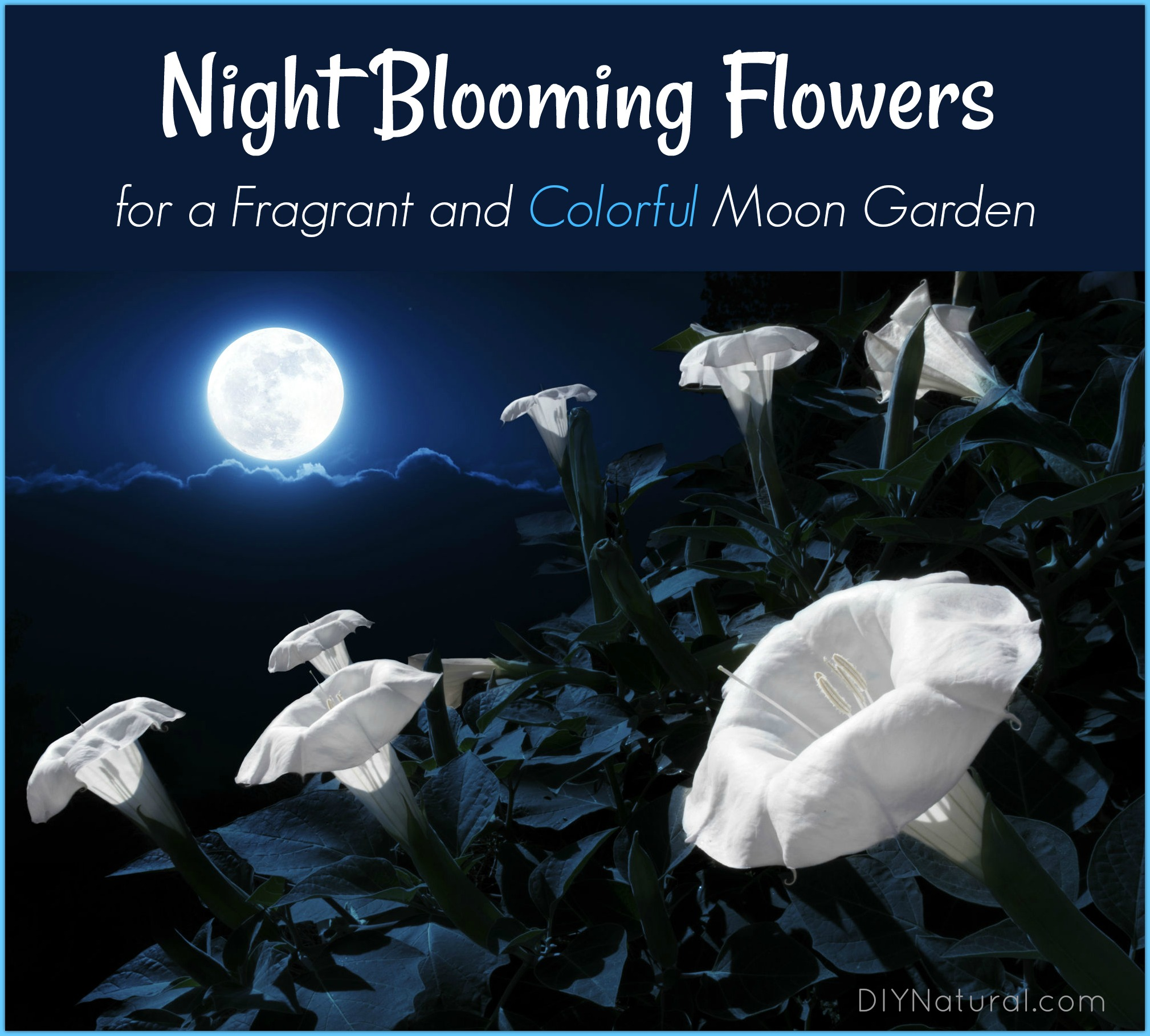 Night Blooming Flowers Moon Garden
