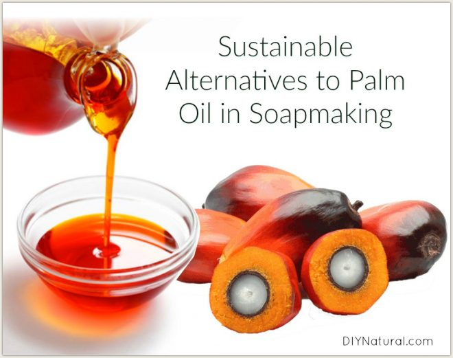 Palm Oil Alternatives