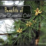 Natural Benefits of Pine and Pine Essential Oils