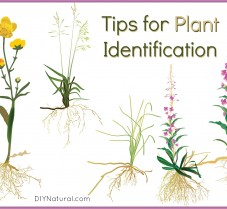 Tips For Improving Your Plant Identification Abilities
