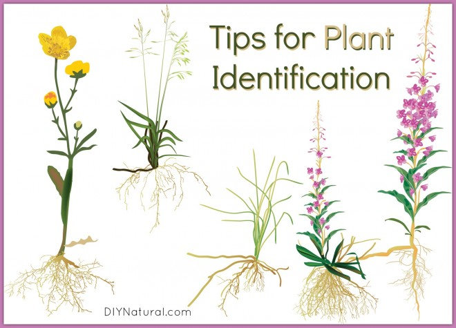 Plant Identification Tips To Help Improve Plant Recognition