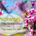 Why Pollinators are Important & How We Can Help