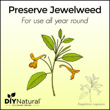 Preserve Jewelweed