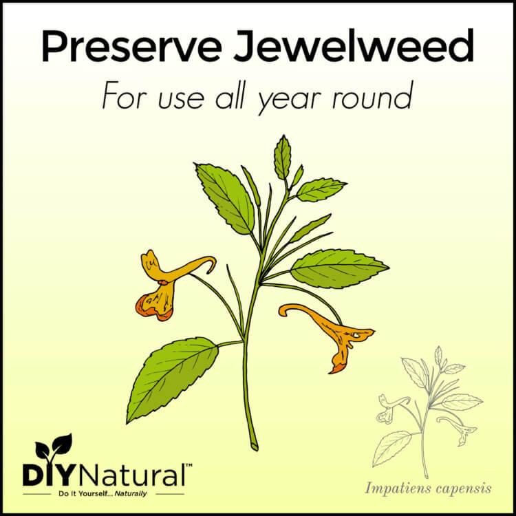 Preserve Jewelweed