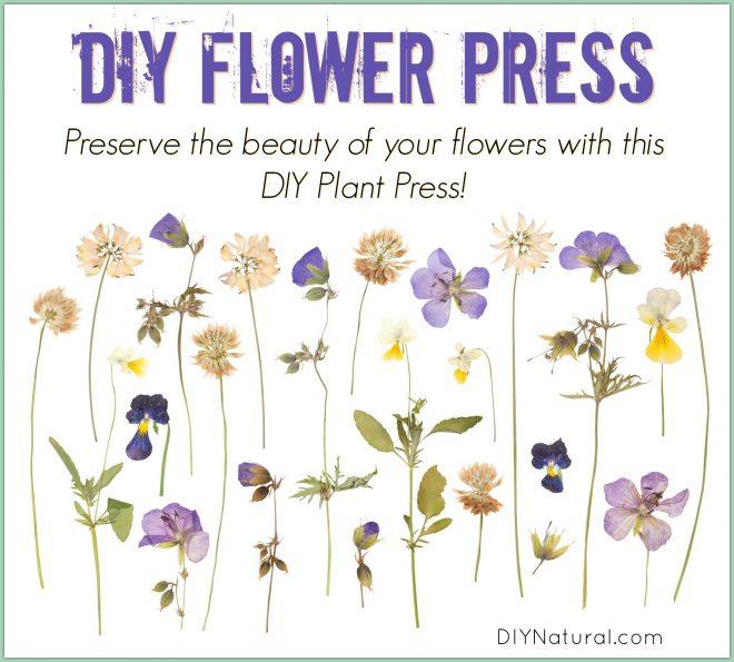 Pressing Flowers DIY Press