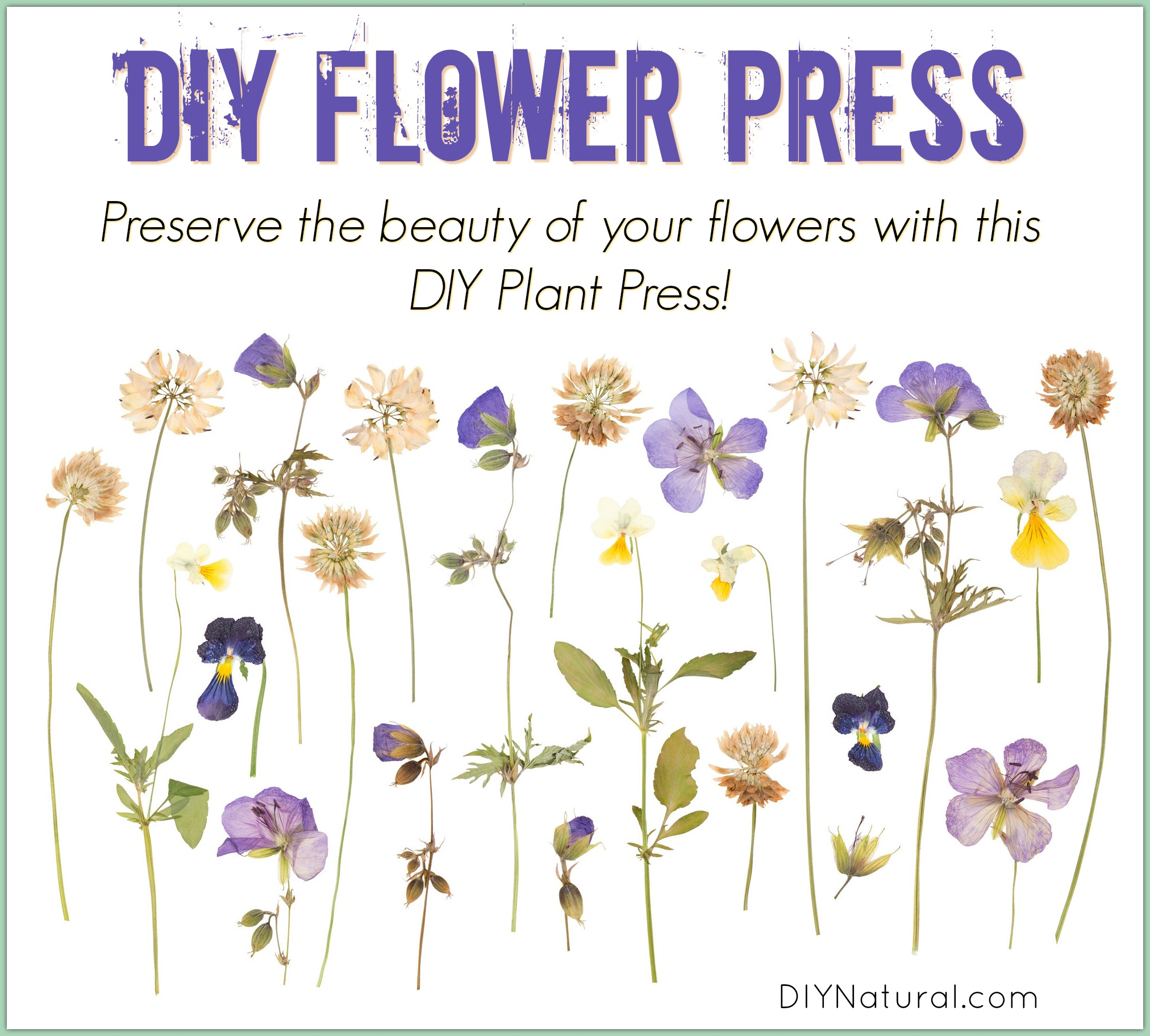 Pressing Flowers With A Homemade Flower And Plant Press