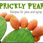 Health Info on Prickly Pear and A Few Yummy Recipes